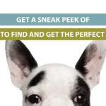 Get a Sneak Peek of How to Find and Get the Perfect Boss